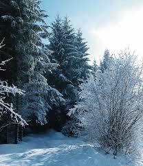 Obvestilo o razpisu letovanja zimskih in novoletnih počitnic 2018/2019