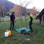 JZ Triglavski narodni park nam je podaril sadiko slive